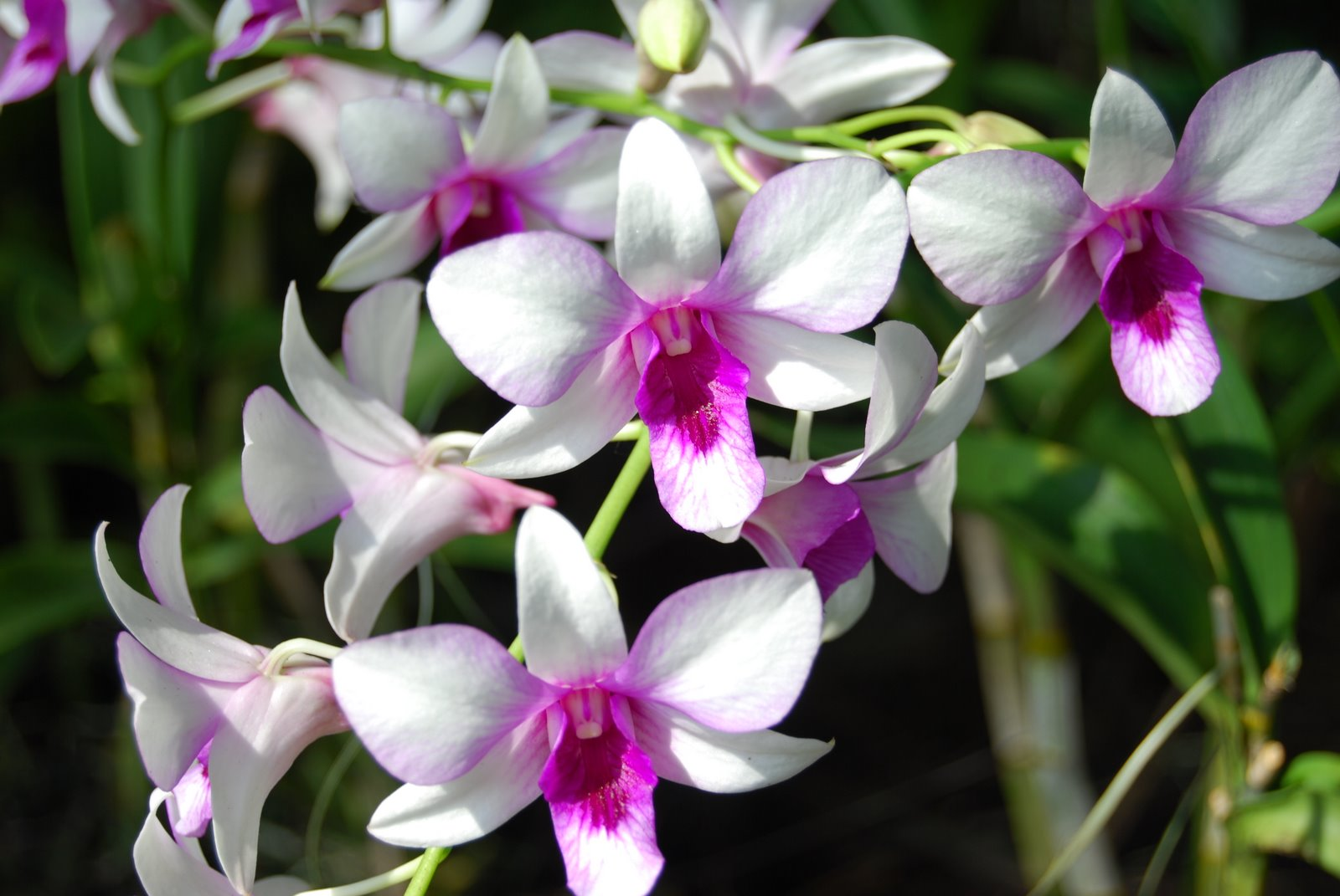 beautiful flower - orchid