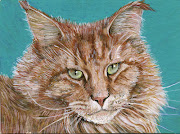 Maine Coon cats. Red tabby 1 and 2