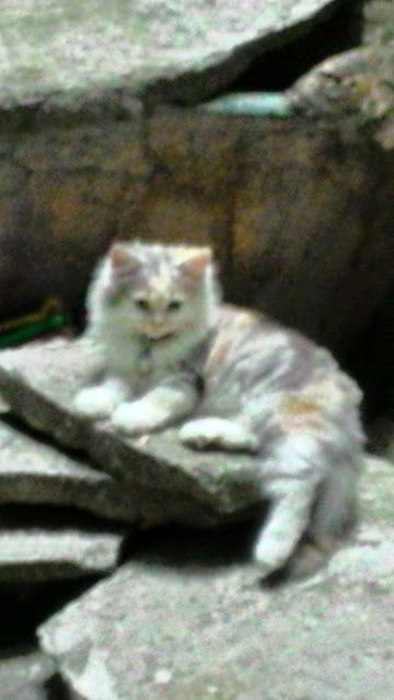 foto-kucing-imut_06