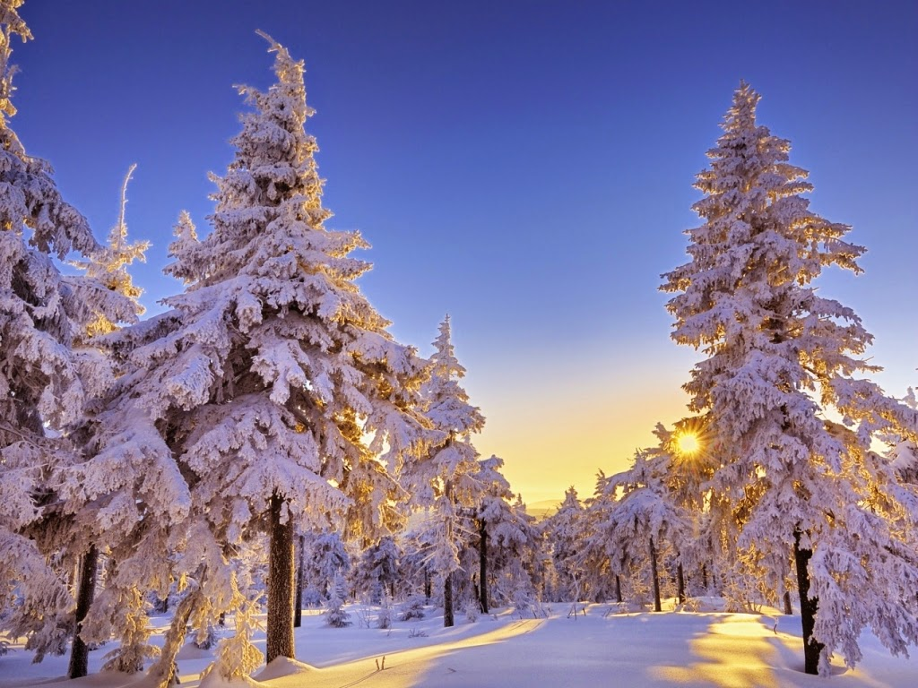 http://funkidos.com/pictures-world/nature-pictures/snowy-tree-pictures