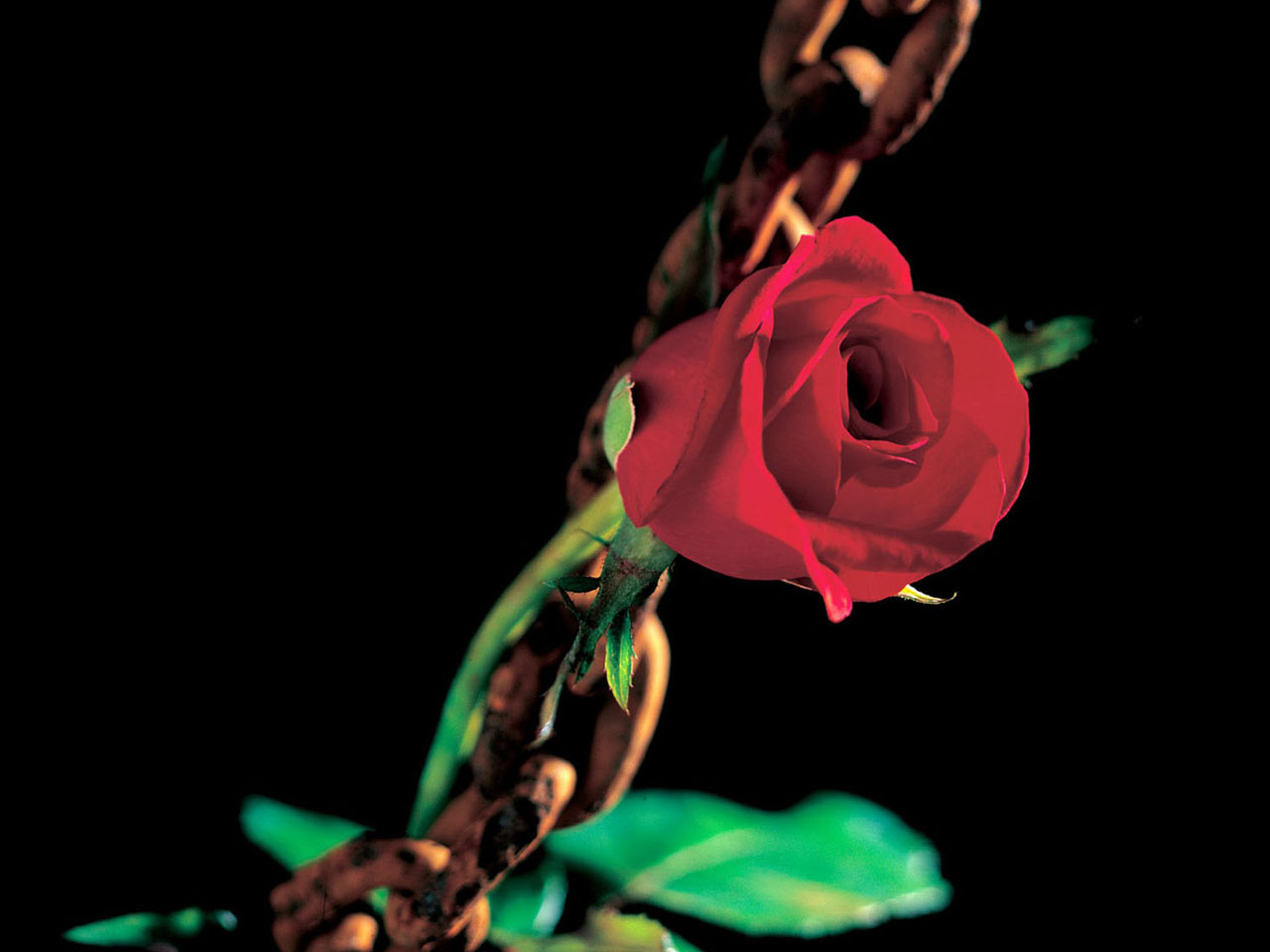 Full Wallpaper Romantic Roses Wallpaper