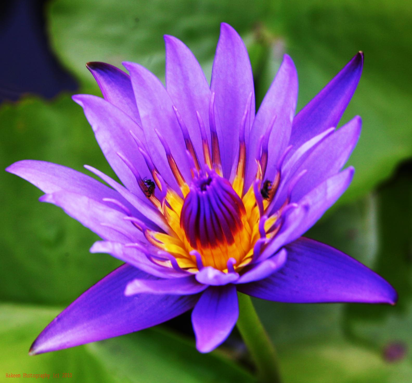 Sweet Flowers Delights Flower Names