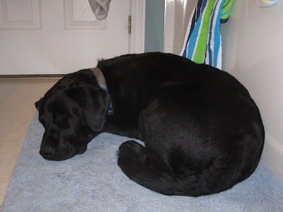 Black lab puppy Romero is curled up, fast asleep on the light blue bath mat beside the white bath tub. His eyes are squeezed shut, his head is resting on his front paws, and his tail is tucked up beside his back feet. He is wearing a gray and blue Blue Jays collar. Behind him, a bright green, blue, and white towel is hanging over the edge of the bath tub.