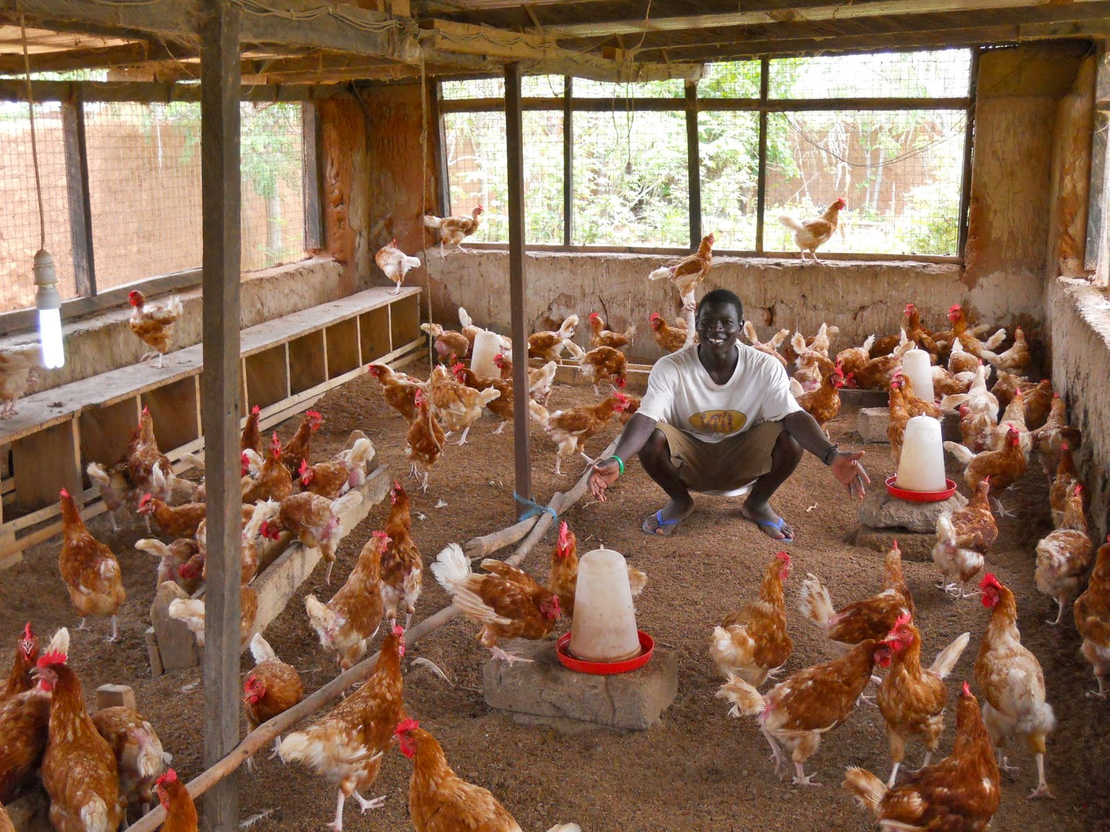 how to buy a chicken farm