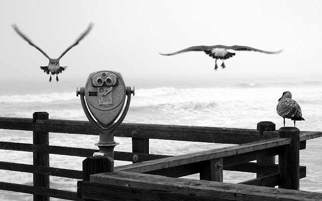 ocean birds quotes wallpaper