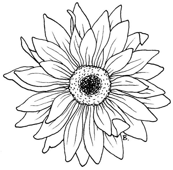 Beccy 39 s Place Sunflower Gerbera