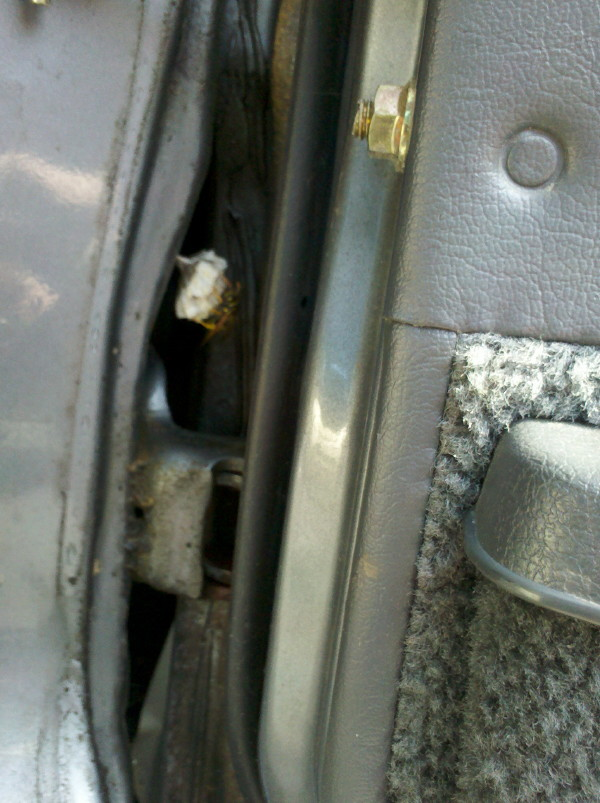 Julian's early morning blog: May 2012 Wasp Nest In Car Door