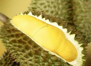 memilih durian bagus dan enak
