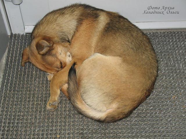 пес Бублик