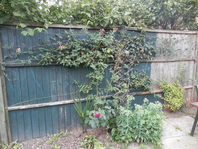 Honeysuckle and clematis to cover fence. secondhandsusie.blogspot.co.uk