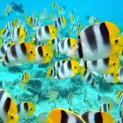 populasi ikan di laut