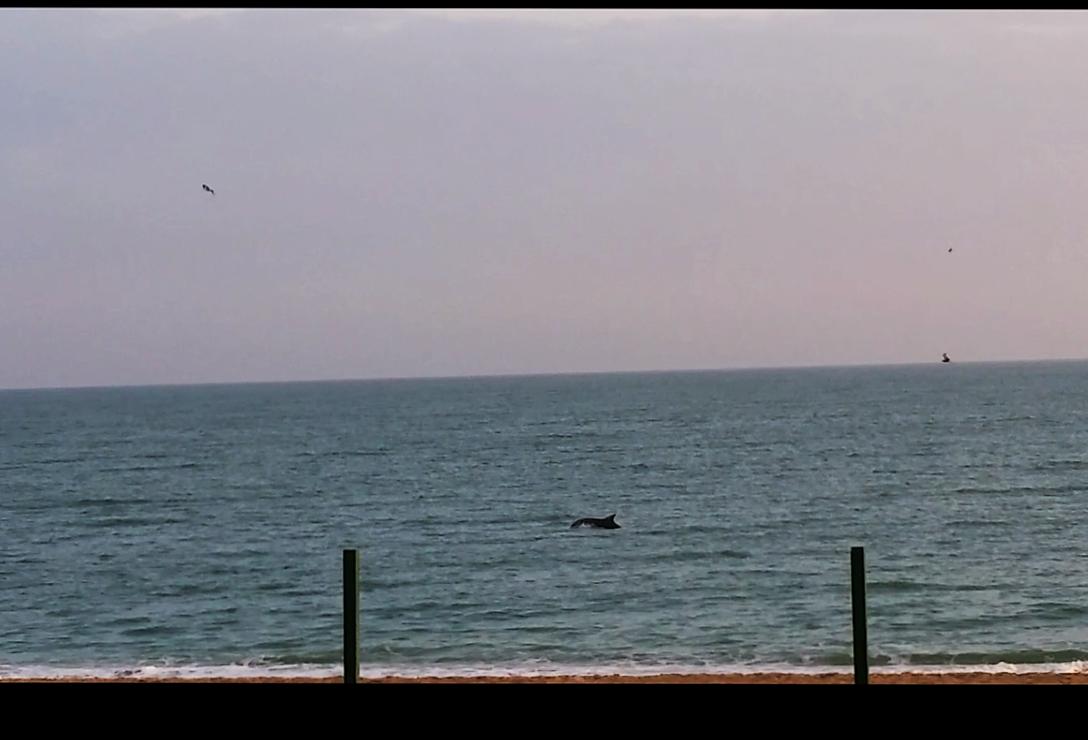 Buon 2016 dai delfini di Numana