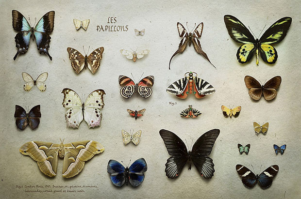 fotos,Peter Lippmann,photographs,art,cartier,magazine,mariposas,butterfly,papillons,jewelry