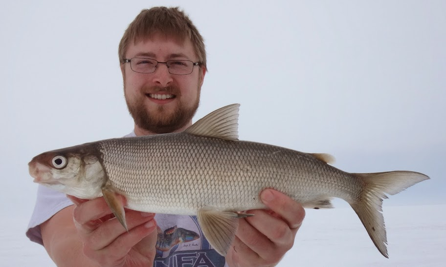 Species Profile (Squanga Whitefish) - Species at Risk Public Registry