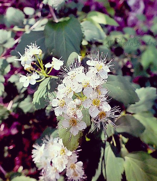 floare baile tusnad
