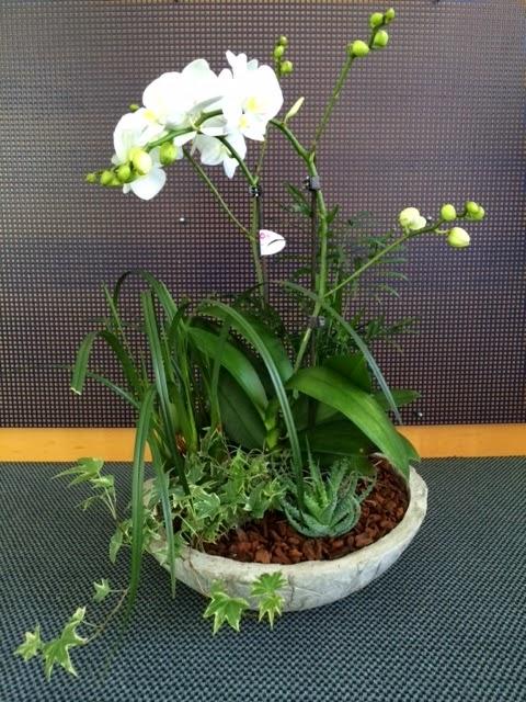 Betonplausch betonschale mit orchideen arrangement - Orchideen arrangement ...