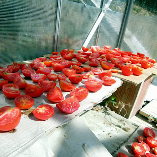 how to sun dry tomato
