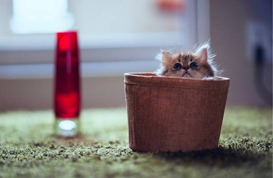 anak-kucing-comel-dalam-bakul