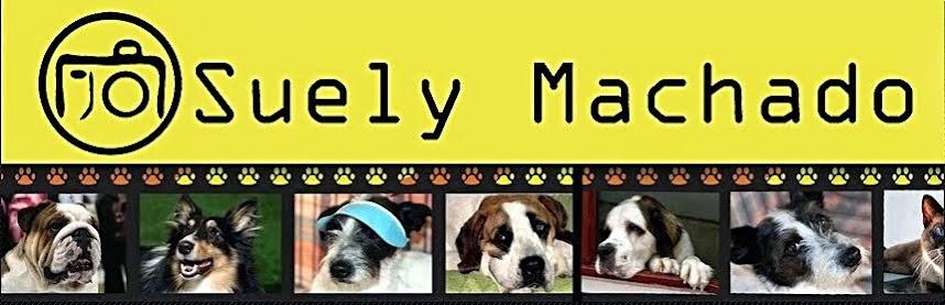 Suely Machado Pet