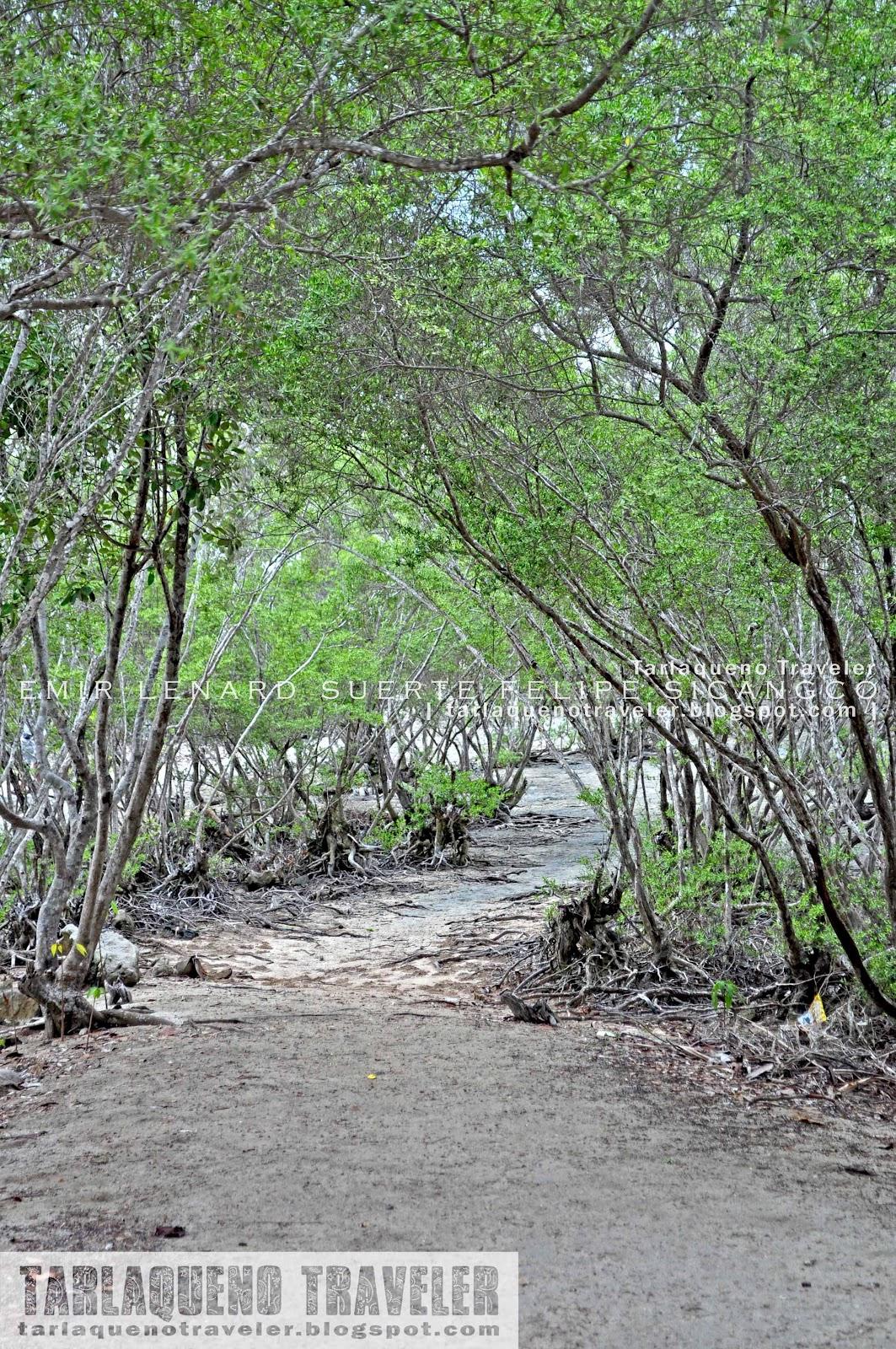 Trail to the view deck of Olango Island Wildlife Sanctuary