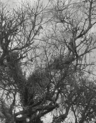 syair dan puisi tentang keadaan alam karya kunaidi.com