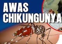 Cara  Cepat Menyembuhkan Penyakit Chikungunya