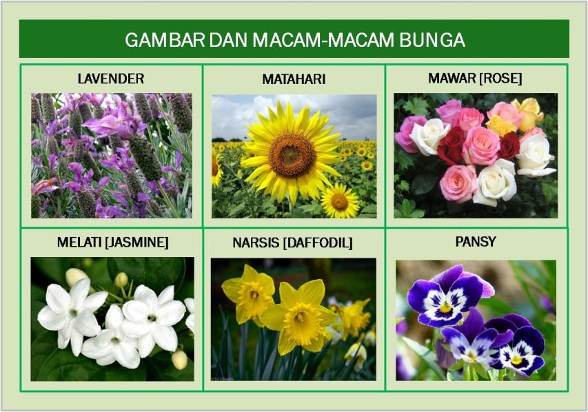Gambar Amp Macam Jenis Bunga Bagian Bunga Amp Fungsinya Freewaremini