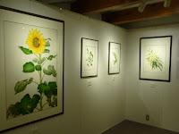 土蔵では野村陽子・植物細密画展(ボタニカルアート)特別展