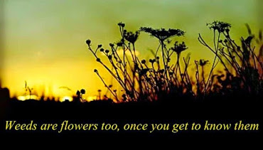 #2 Amazing Flowers Quotes Wallpapers
