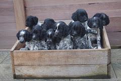 Stommeerpolder pupjes 2016