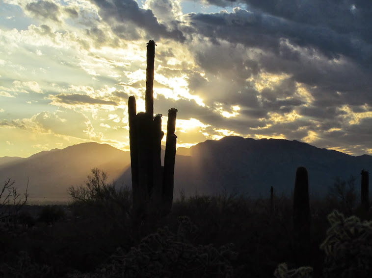 Sunrise on Saguaro
