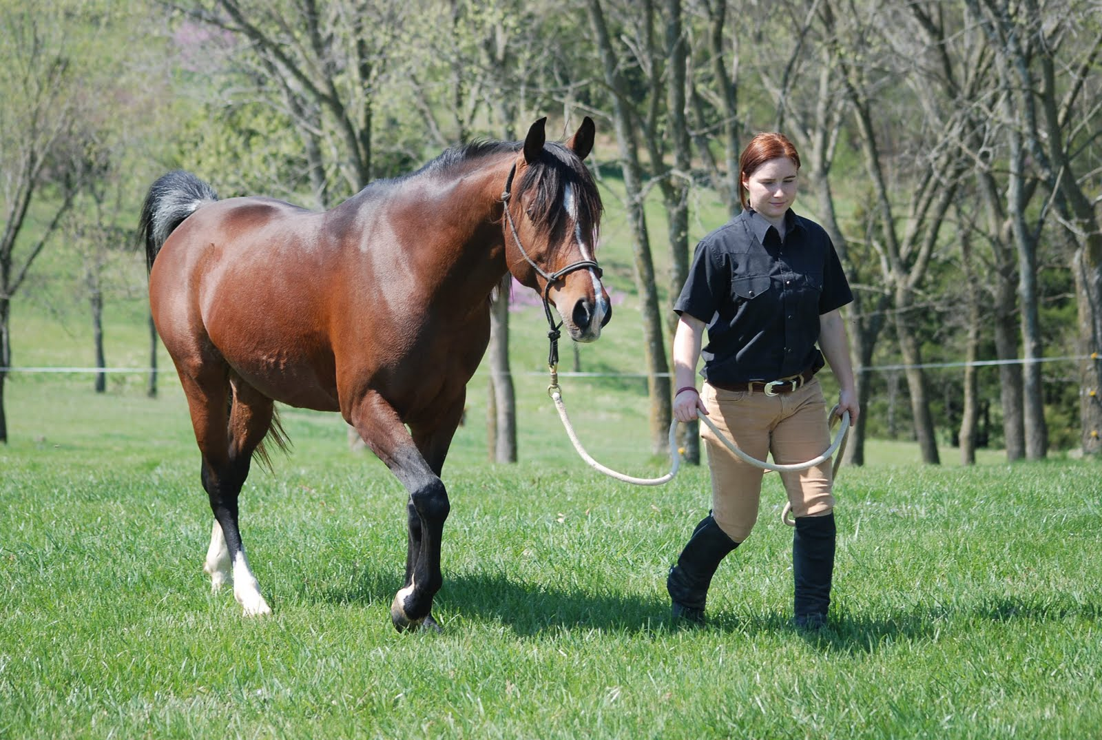 Babson Arabian Horses  Axiomarabians.com