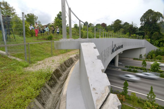 Plants are also grown at the edge of the bridge to create a buffer against noise and dust pollution so that animals will not be inhibited from using it.