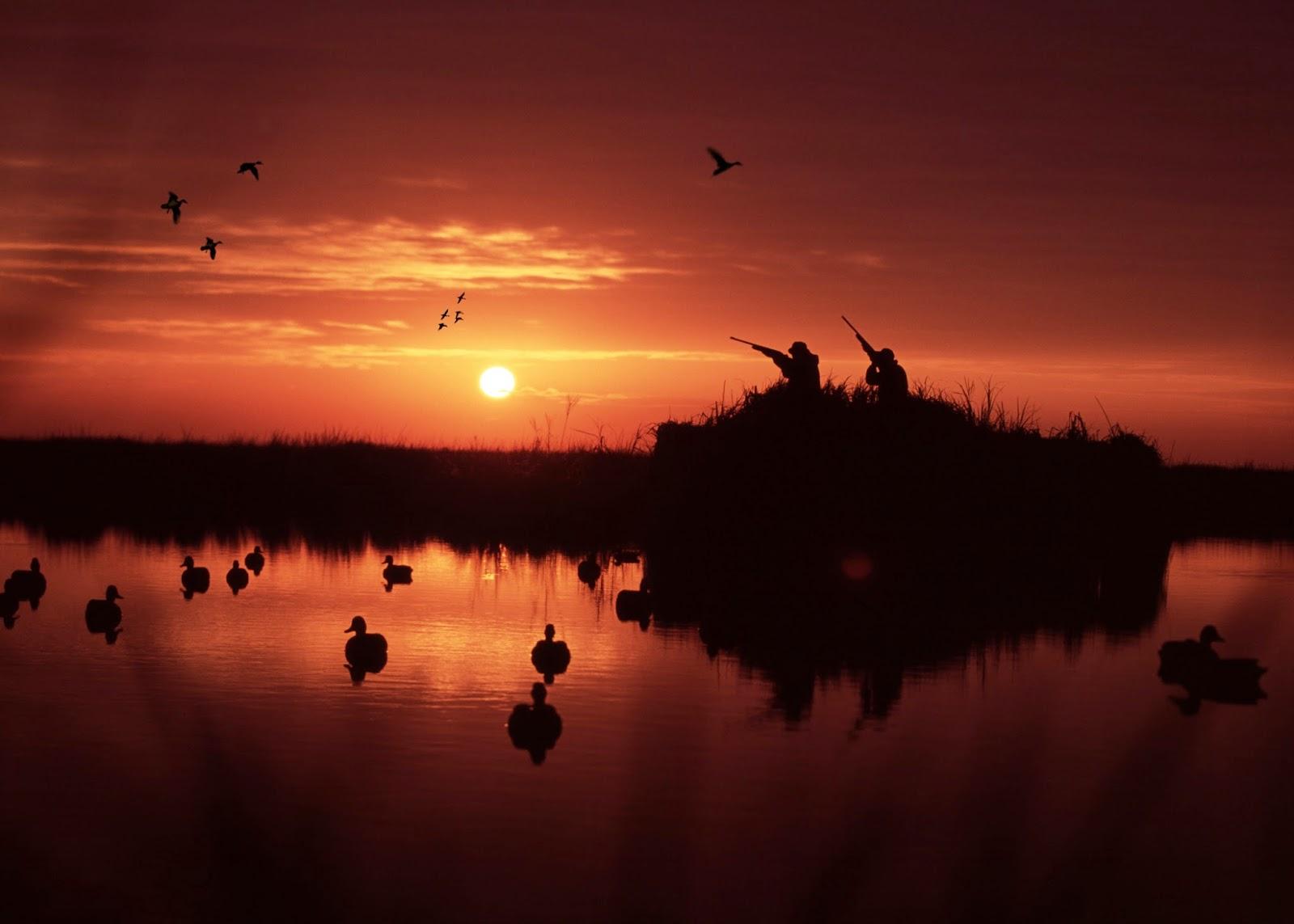 duck blind wallpaper