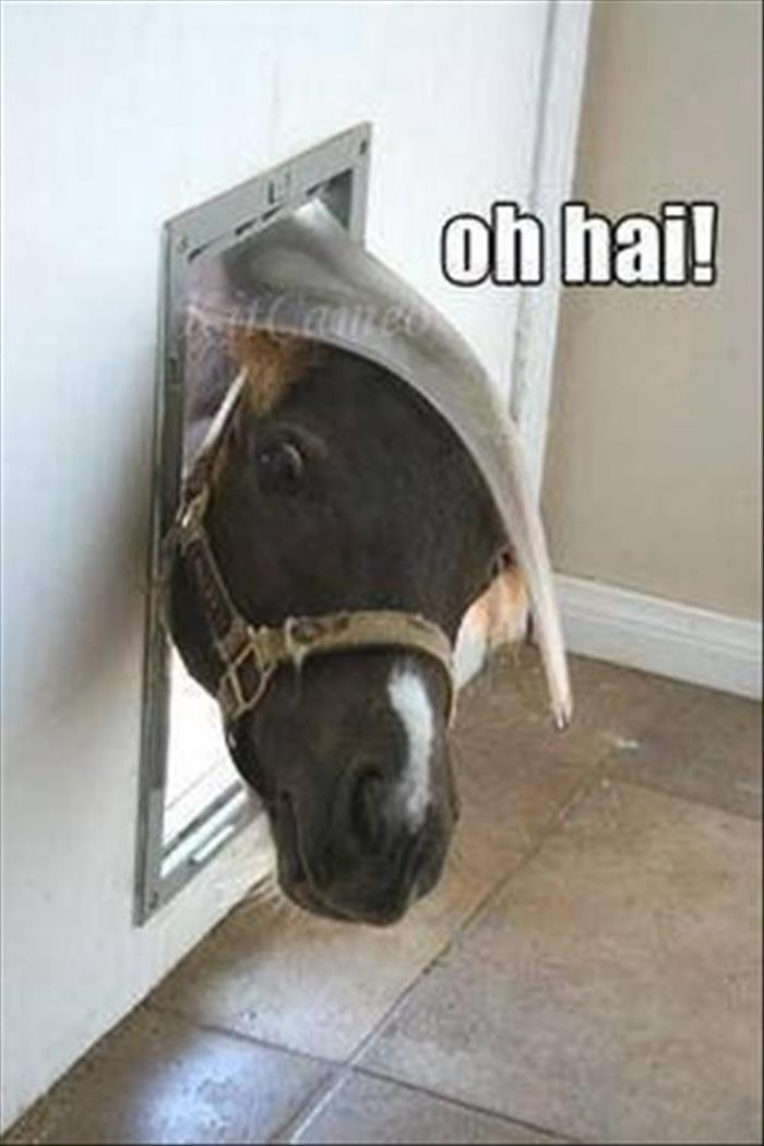30 Funny animal captions - part 42, funny animals with captions, captioned animal picture