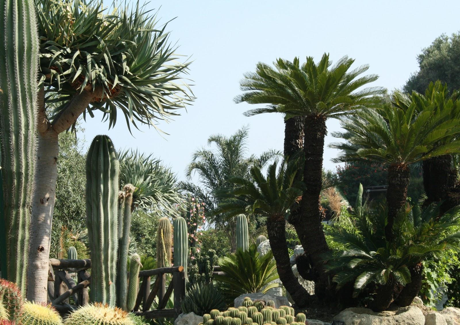 Ischia residence ravino un giardino botanico for Piante colonnari