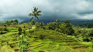 Jatiluwih Rice Fields UNESCO Landscape