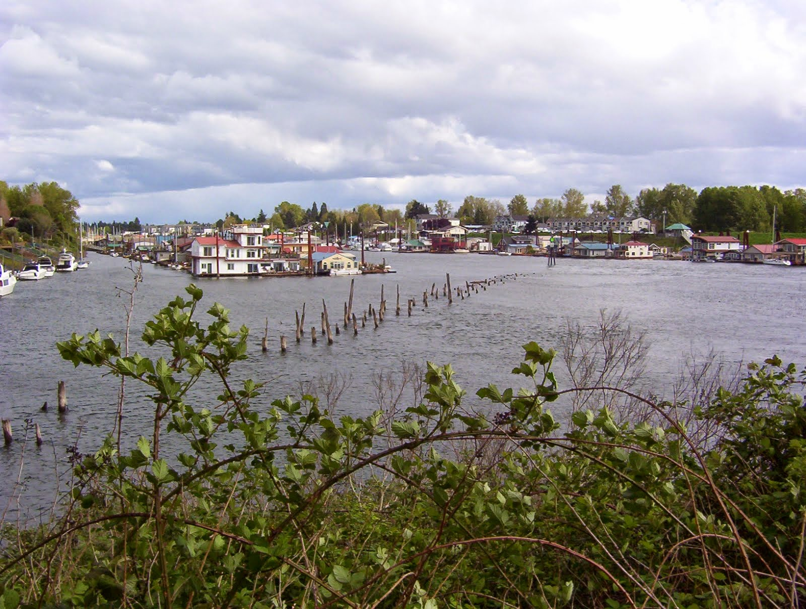 Pilings are all that remain from a 1930 streetcar  bridge crossing the North Portland harbor