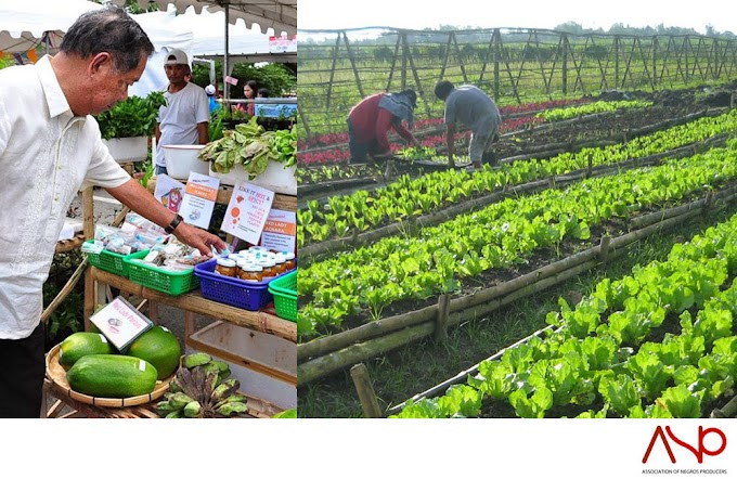 Negros Island Region 18 Surpasses The Global Average For Organic Farming Cultivation