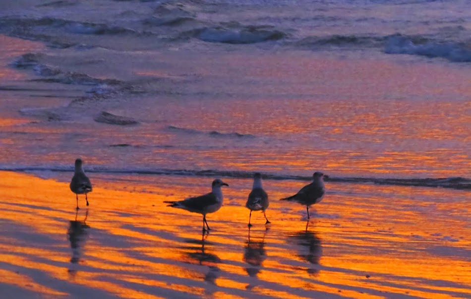 Galveston Beach at Dawn