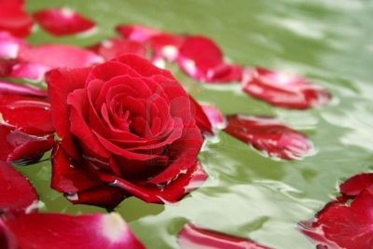 Petales de roses - Petales de roses sechees ...