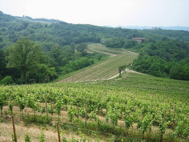 Friuli-Venezia Giulia vineyards