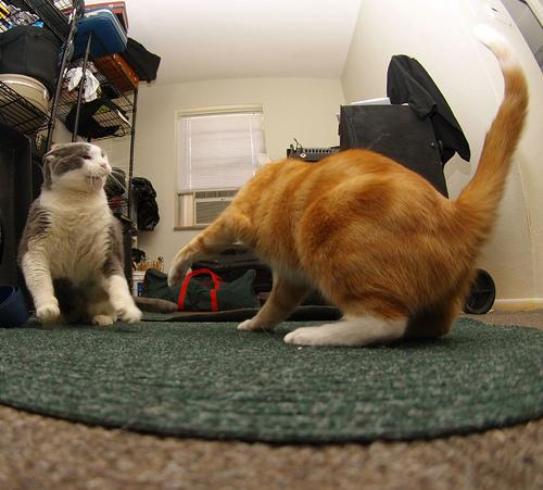 big buddy & orangie by paparutzi