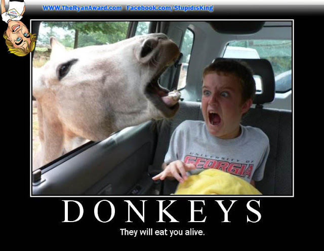 When Donkeys Attack