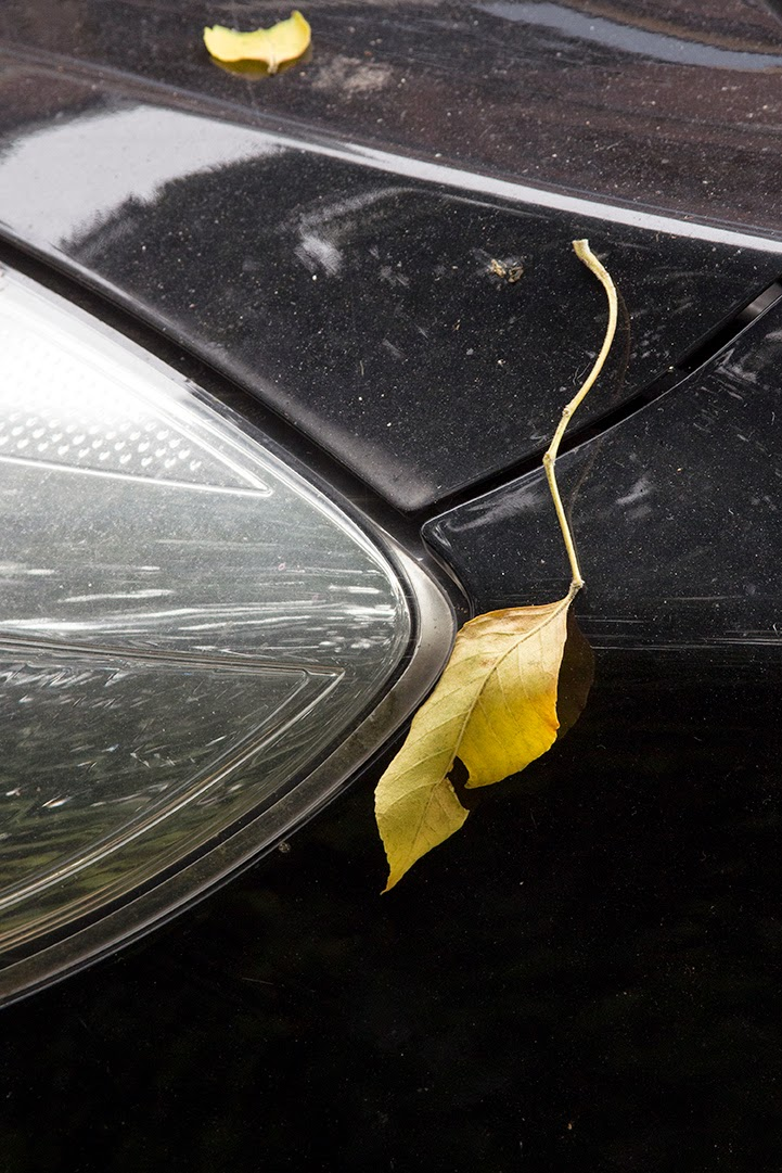 yellow leaves on black car