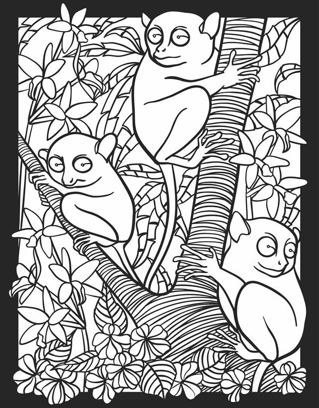 nocturnal animals coloring pages - photo#10