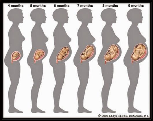Perkembangan bayi dalam kandungan hamil 32 minggu, perkembangan fetus bayi ibu mengandung 32 minggu, wanita hamil mengandung 7 bulan trimester tiga, tanda mengandung usia 32 minggu, keadaan ibu mengandung 32 minggu, cara mengandung, gambar janin bayi fetus 32 minggu, pakaian dan diet pemakanan ibu mengandung, cara jaga kandungan hamil