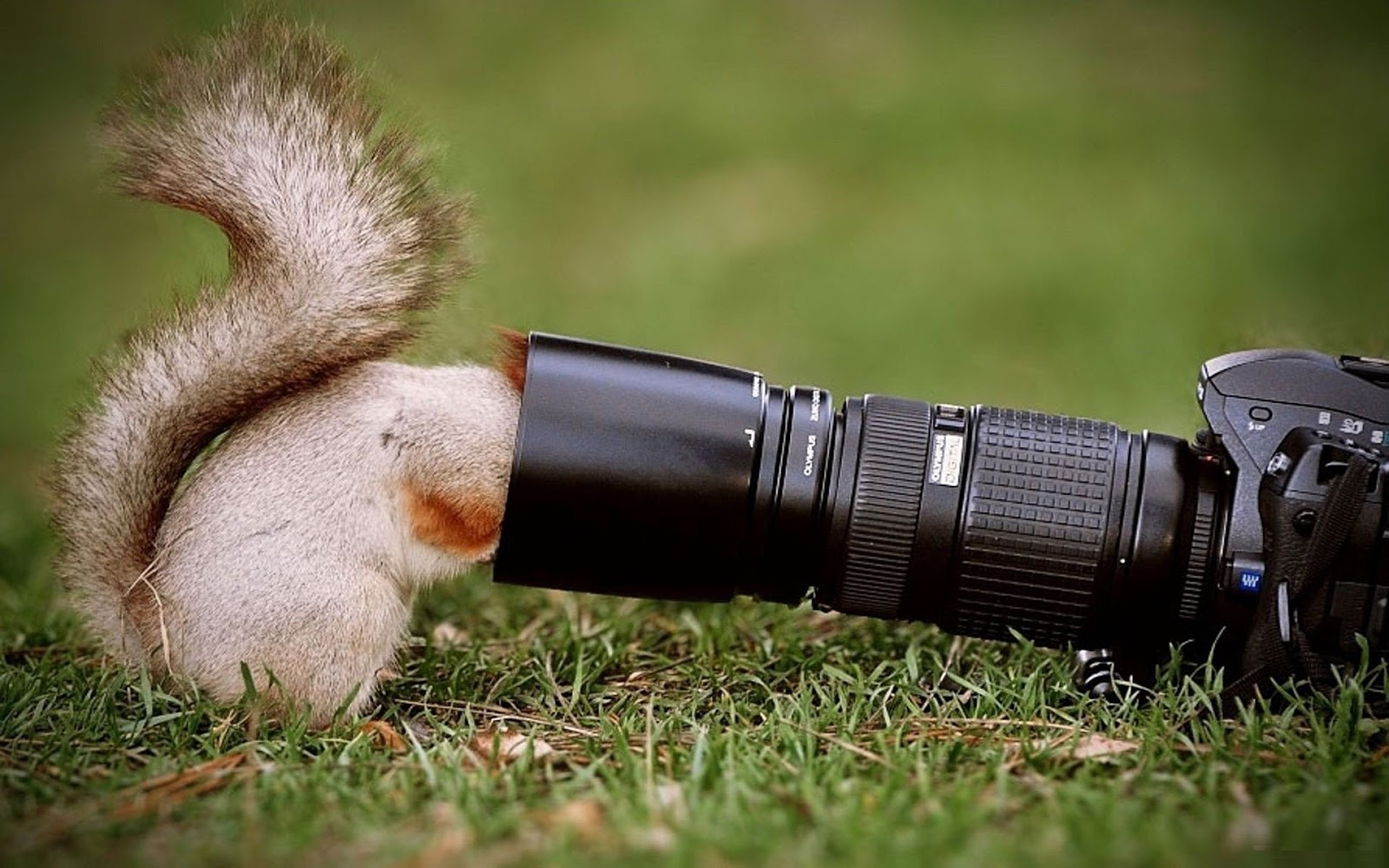 Squirrel Looking into Camera Funny Wallpapers Latest