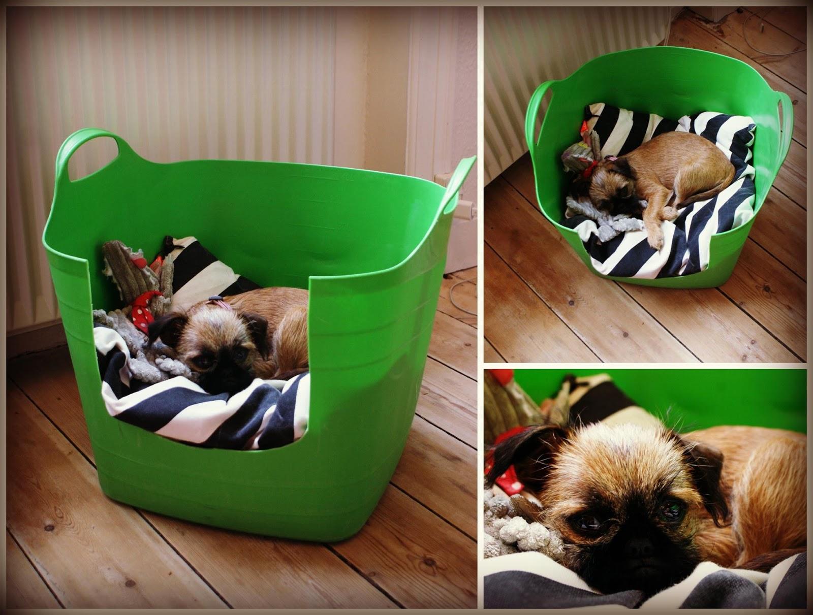 Mit kreative kaos : Lav selv en sjov hip hundeseng til ...
