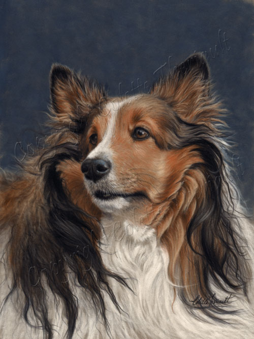 Pet Portrait of Shetland Sheepdog Painting